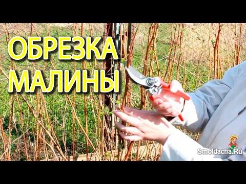 Как обрезать малину весной видео для начинающих