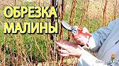 Интернет магазин greensad ✓ яблоня декоративная ✓ актуальные цены ➜ доставка по украине.