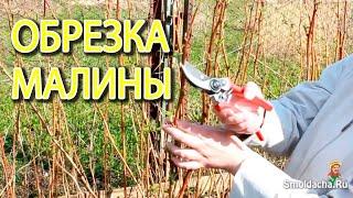 Обрезка малины весной(Простые приемы обрезки малины в весенний период. Из видео вы также узнаете, как отличить ремонтантную малин..., 2013-05-05T15:40:15.000Z)