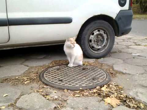 Znaleziony Biało Rudy Kot