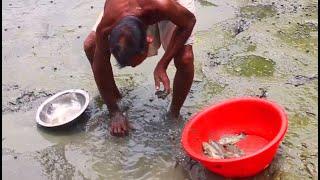 Catch a lot of fish | Asian  stinging catfish | fish farming pond - koy fish / coy fish Mp3