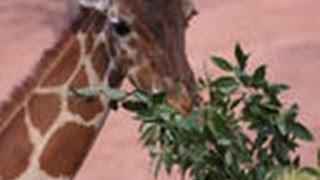 2007年 14分 動物園、水族館、植物園で行なわれている調査・研究にスポ...