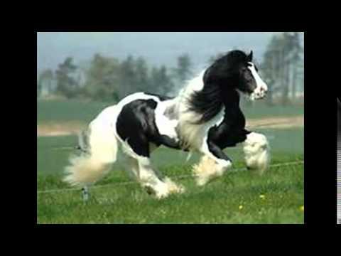Top 10 des plus beau chevaux du monde selon moi youtube Les plus beaux hommes du monde
