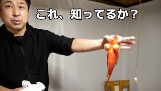 魚のプロが『めずらしくて、めちゃうまい』と絶賛する 謎のデメキンを持ってきたのでさばいたら・・・・。