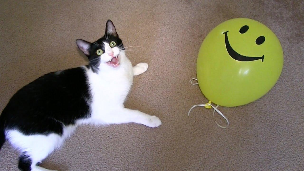 Crazy balloon animals - Balloon Cute Crazy Funny Cats