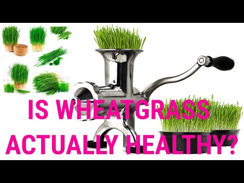 is-wheatgrass-actually-healthy?- -health-&-fitness-channel