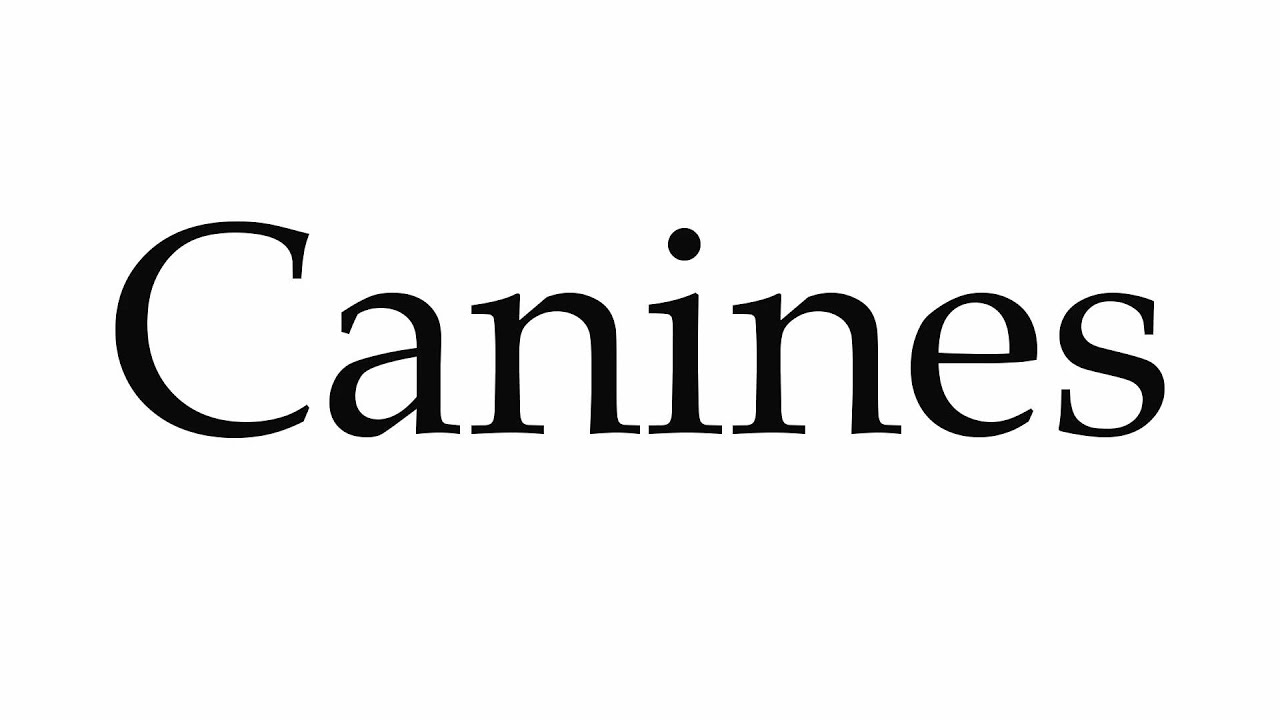 How to Pronounce Canines