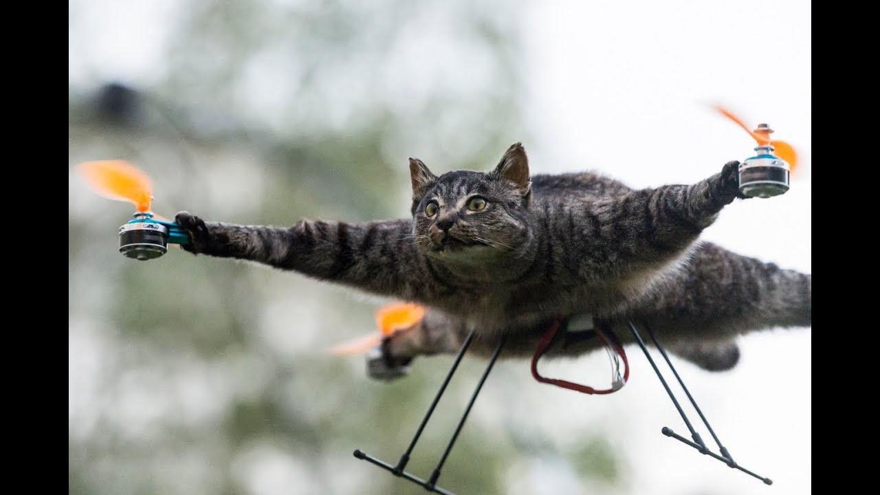 Katze Drohne