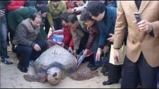 Ông chủ tốt bụng cứu rùa phóng sinh, 16 năm sau nó quay về tìm… con trai ông đền ơn cứu mạng