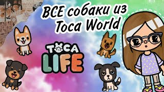 ?ВСЕ СОБАКИ В Toca World?   Toca Boca   Toca World   Тока ворлд   Toca Frog???♀️