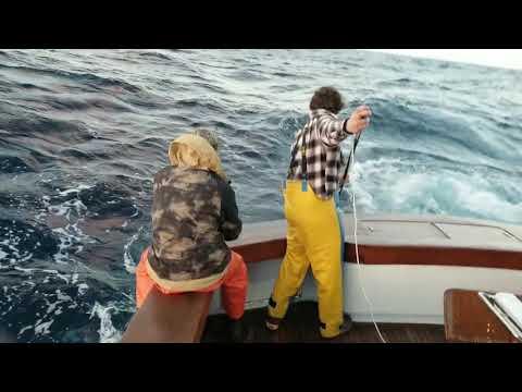 Sylvain Cote's 1st Giant Bluefin Tuna, Caught Aboard