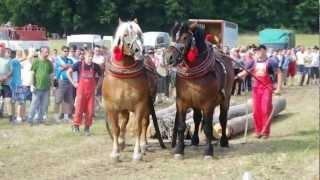 Furman a jeho kone, Kľušov 2012