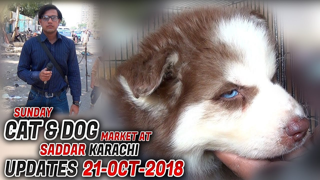 Saddar Dogs & Cats Sunday Market 21-10-2018 (Jamshed Asmi Informative  Channel) In Urdu/Hindi