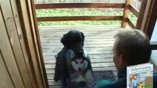 Dog Clicker Training - Learn About Clicker Training For Dogs