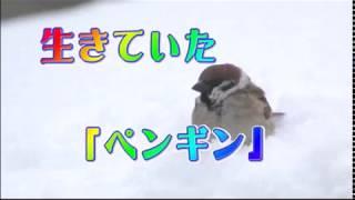 Episode20 姿を消してから2週間後、ひょっこり現れた「ペンギン」です...