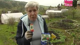 Обработка клубники от вредителей весной