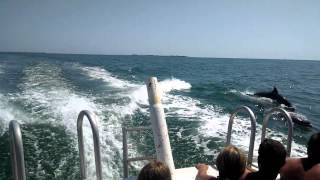 Dolphin /snorkeling trip Clearwater Florida