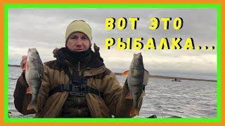 Окунь Рыбалка в Креницах Ладожское озеро
