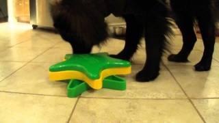 Her Dog Blog - Kyjen's Star Spinner