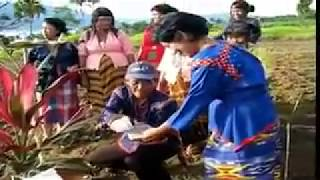 Mansaka tribe of there ethnic and cultural lifestyle