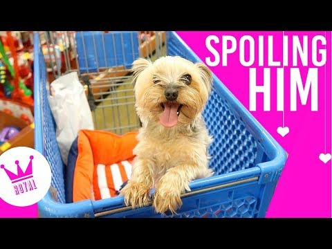 Taking My Dog Pet Store Shopping & Vet Trip