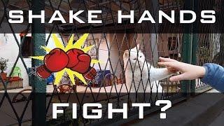 A Cat's Fight | или Дай Пять