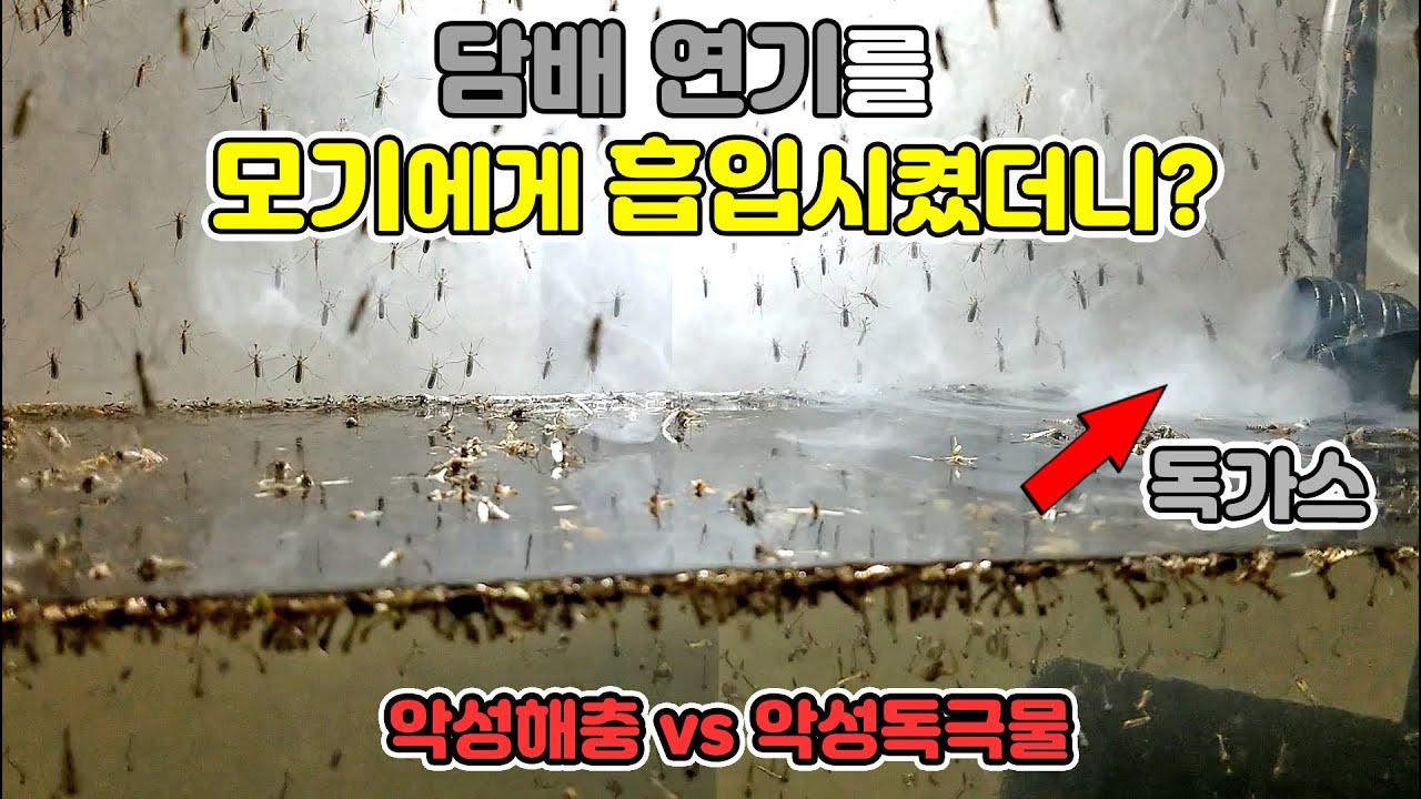 [모기지옥3]  모기에게 담배연기를 흡입시켰더니 충격적인 결과가...이래도 피우실건가요..