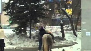 Девушка с лошадкой