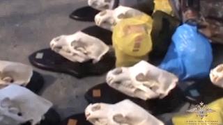 Браконьер из Приморья возместит свыше 9 миллионов за убийство краснокнижных животных