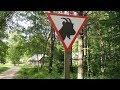 Эстония. Таллин. Эстонский музей под открытым небом. Корчма Колу. Народная музыка,. Танцы