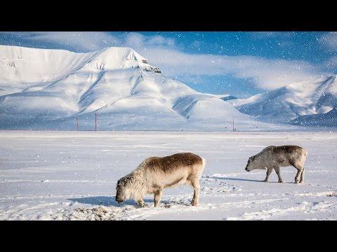 Svalbard Travel