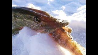 Дай попробовать Щука на жерлицы окунь и плотва на безмотылку Зимняя рыбалка 2019