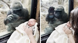 New Mom and Gorilla Bond Over Woman's Baby