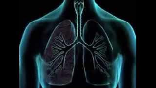 Por berilio pulmonar enfermedad