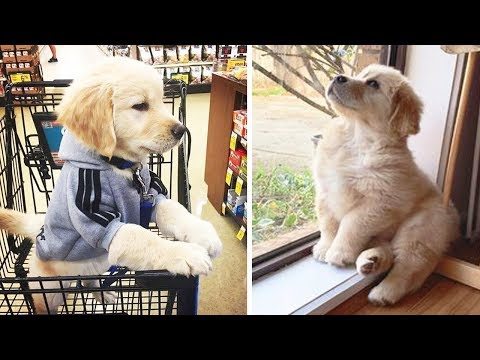 ❤️Cute Puppies Doing Funny Things ❤️#8 Cutest Dogs