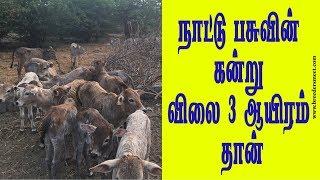 3 ஆயிரம் முதல் நாட்டு மாட்டின் கன்றின் விலை | Native Breeds of Tamilnadu