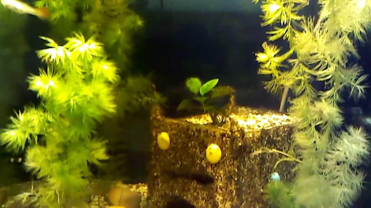 Грот для аквариума своими руками видео   720x1280