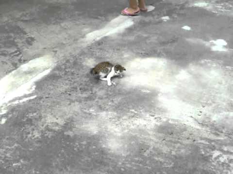 кошка делает сальто