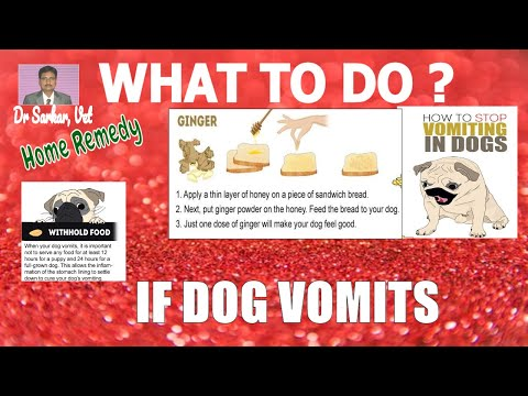 what to do if dog vomits!