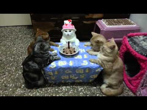 Thumbnail for Cat Video Cat Celebrates Her Birthday in Style