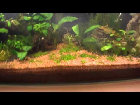 Борьба с водорослями (Часть 1)