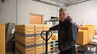 Жизнь на Финской ферме. Люди, на которых держится страна.