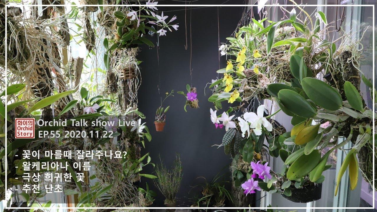 [화이 난초 생방송 EP.55] 왈케리아나 이름 표기법 │학명을 사용해야 하는 이유 │  꽃대 자르기 까닥하다가 │  페티세라에 관해 │ Cattleya walkeriana