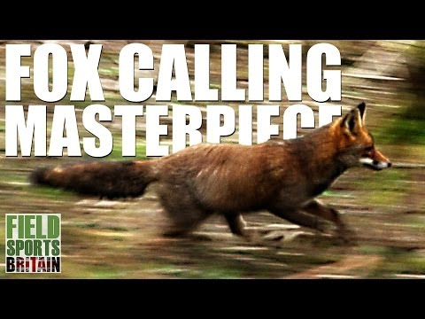 Fieldsports Britain - Fox-calling masterpiece  (episode 224)