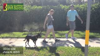 Pinscher Mix - Dog Training Of Fort Myers - Patrick Logue