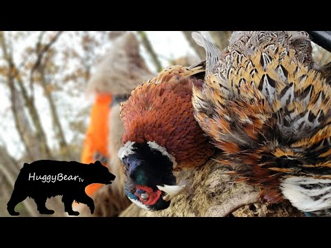 Hangover Hunt: PA Pheasants At First Light