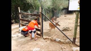 Fun Quad Mallorca