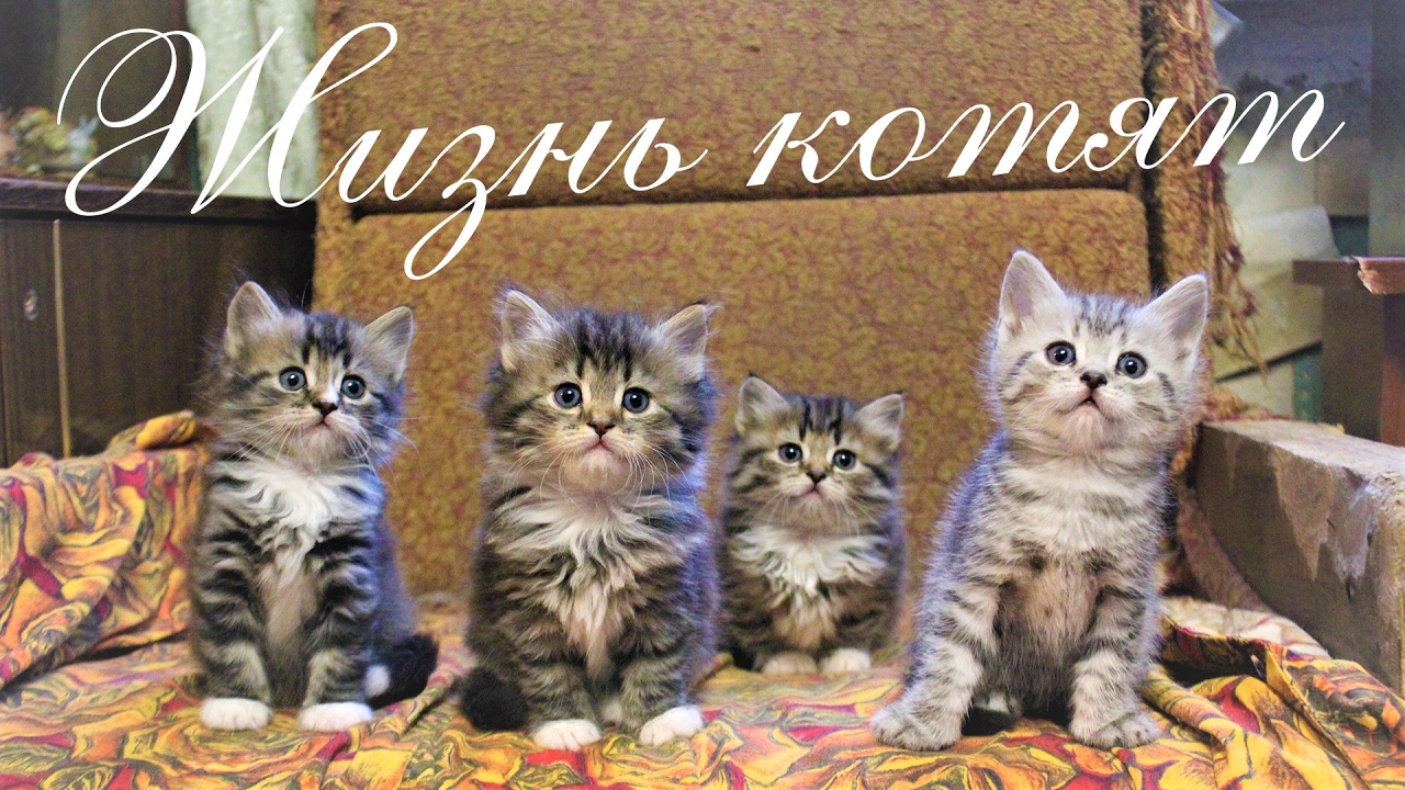 ЖИЗНЬ КОТЯТ. Кошка, Кот, Котята, Собака, Пёс, Ворона и ...