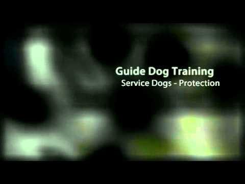 Pro Train Dog Training Oceansideca Dog Training Institute Youtube