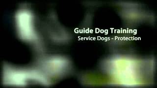 Pro-train Dog Training - Oceanside,ca Dog Training Institute